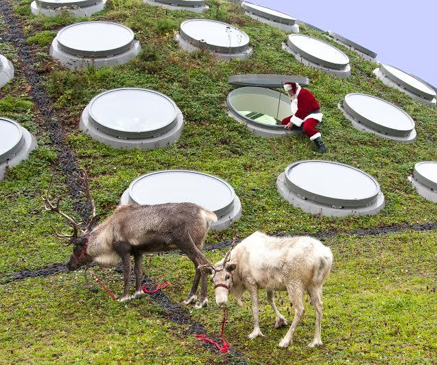 Reindeer Games: Where to Meet Santa's Furry Helpers