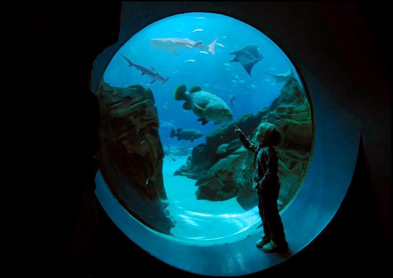 Georgia-Aquarium-Kid