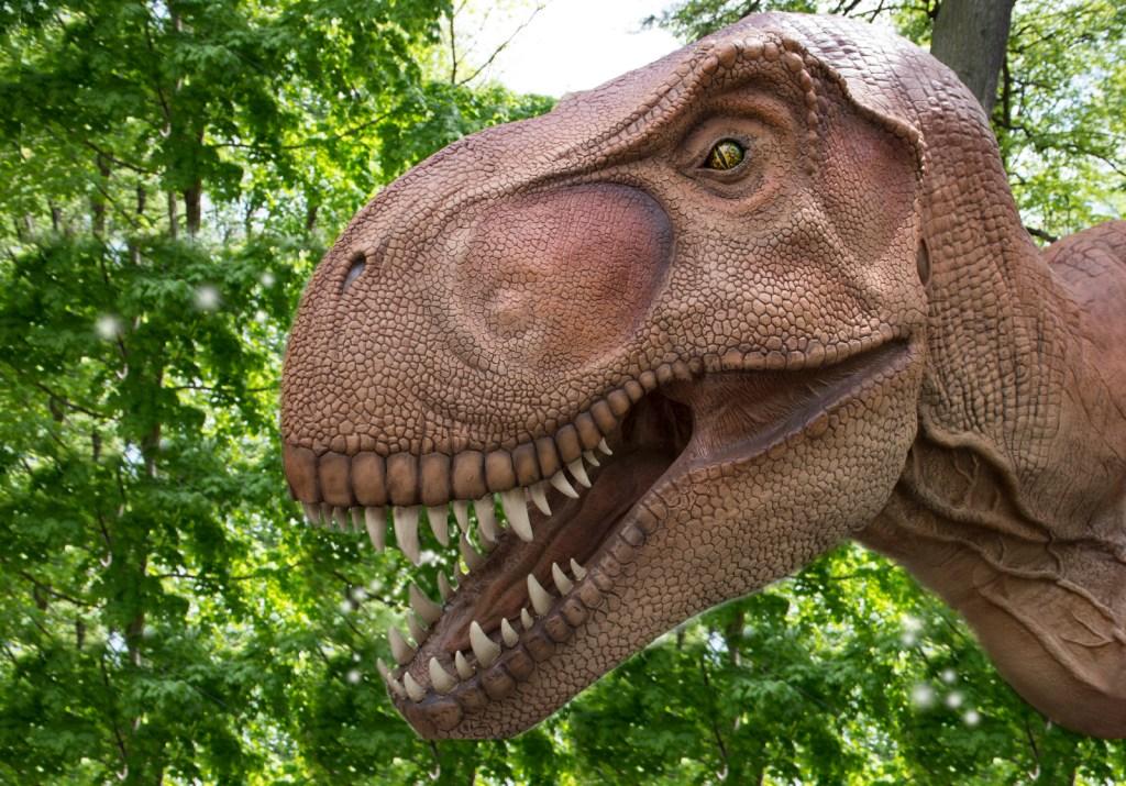 _Julie Larsen Maher 4418 Dinosaur Safari Arrival BZ 05 06 13