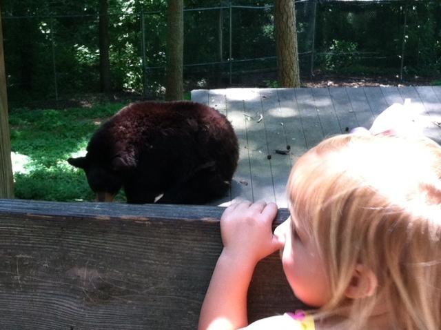 Bear_BHZoo