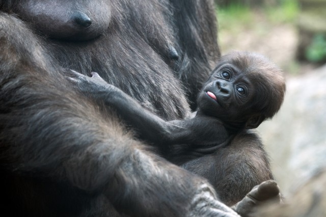 Zoo Babies! Meet the Newest Lil' Animals in NYC