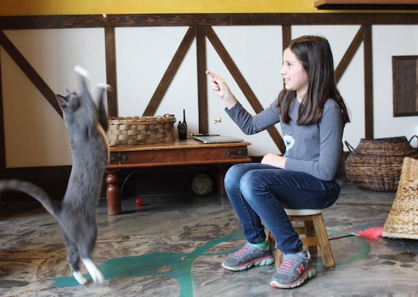 meowtropolitan-cat-dancer