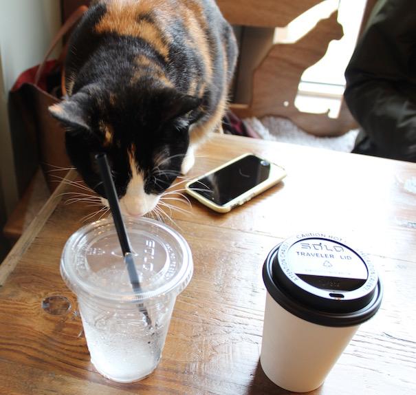 meowtropolitan-cat-table-coffee