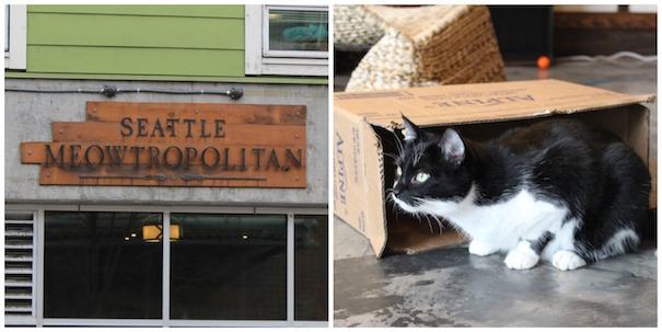 meowtropolitan-sign-box-cat