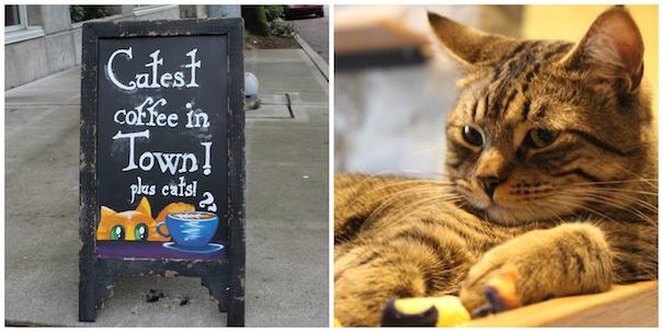 meowtropolitan-sign-cat