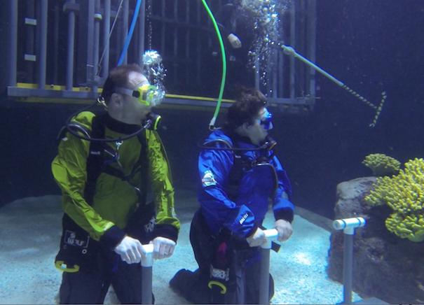 shark.dive.divers