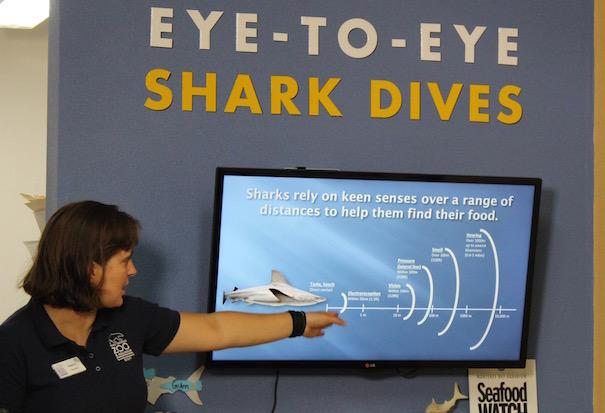 shark-lesson