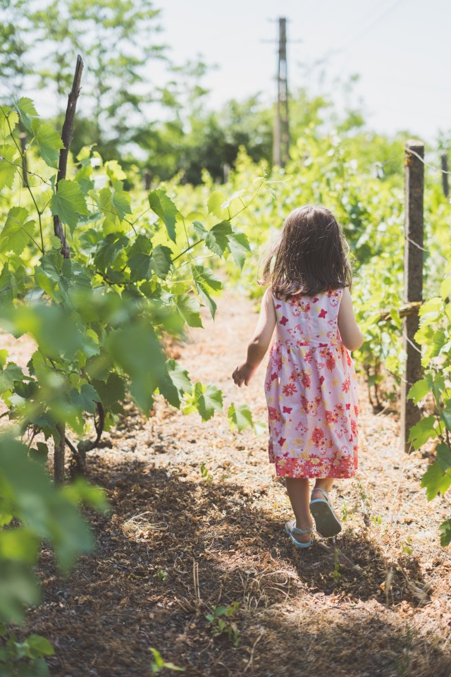 Where to Eat, Sleep & Play in Napa's Wine Country with Kids