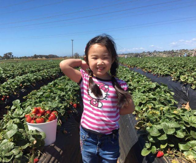 Where to Pick Strawberries Near LA