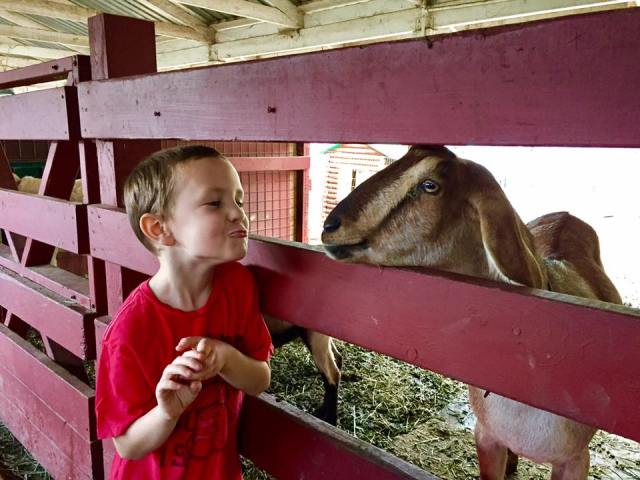 All the Best Ways to Foster Your Child's Love of Animals
