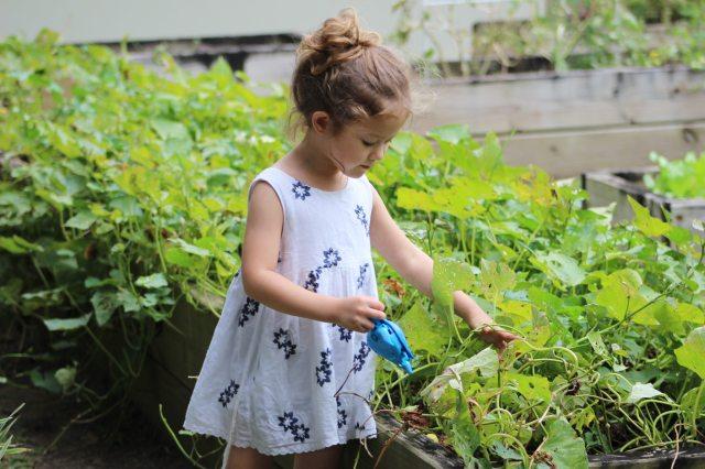 Best San Diego Nurseries & Gardens to Visit This Spring