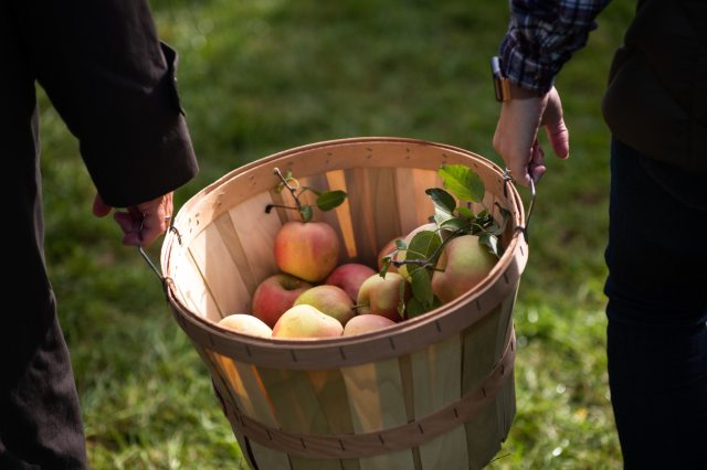 Best Apple Picking with Kids