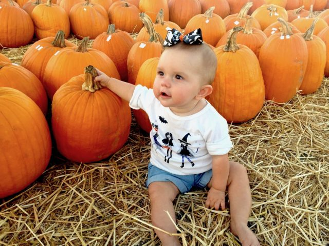 Pumpkin Patch, pumpkins, halloween, fall decorations harvest, fall, fall festival, fall fun, gourd, hay rides, pumpkin farm, scarecrow