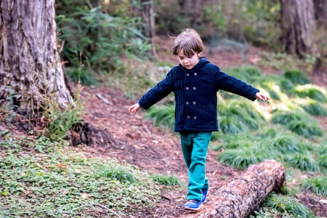Hidden Giants: Redwood Hikes to Take with Your Kids